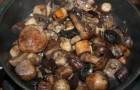 Свежие грибы, тушенные в собственном соку