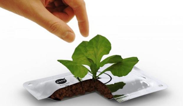 Астронавты сами будут выращивать салат
