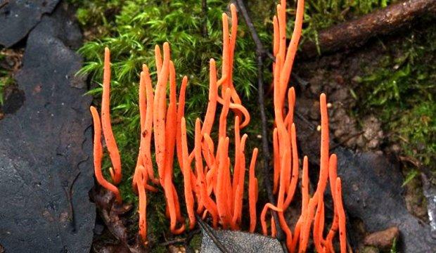 Еда заряженная грибами