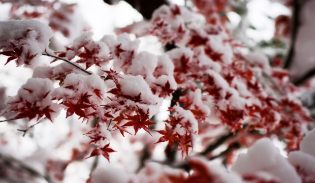 Как растения научились справляться с холодом