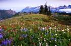 Почему растения так быстро приспосабливаются