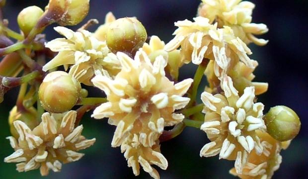 Почему цветковые растения завоевали Землю
