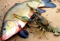 Разведение рыбы и раков