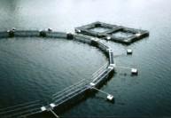Технология разведения рыбы