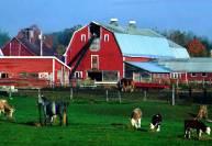 организация фермы