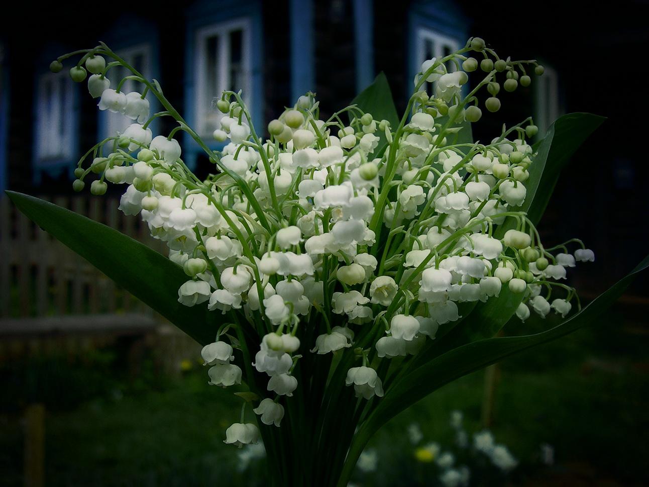 Цветы для любимой фото 10 фотография