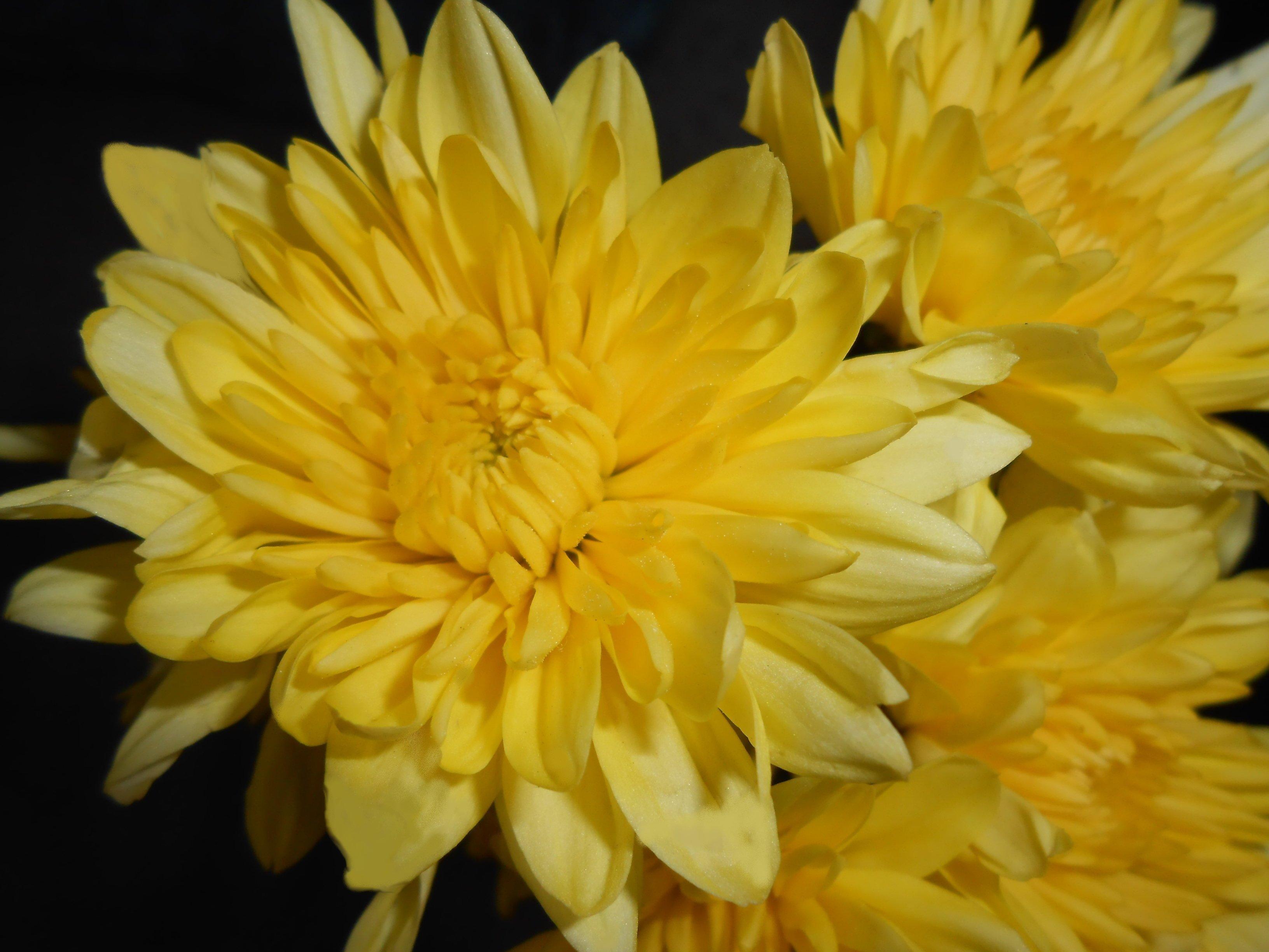 Скачать картинку бесплатно цветы, …