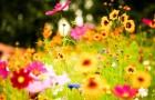 Как растения узнают о том, что происходит вокруг