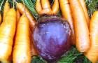 Огурец, свекла и морковь — источник здоровья на всю зиму