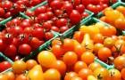 Открытие способное повысить урожайность томатов