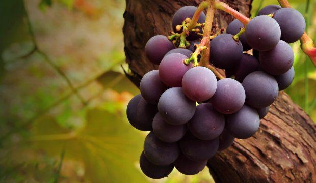 Виноградная кисть
