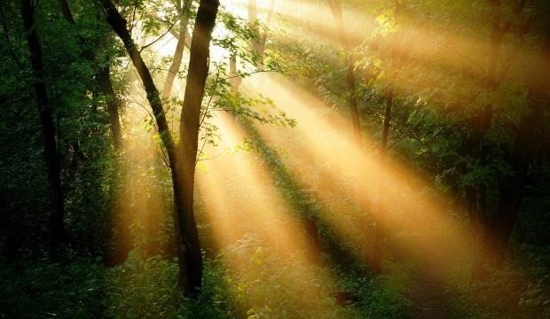 Борьба деревьев за место под солнцем