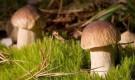 Чем полезны лесные грибы?