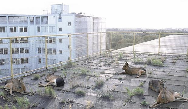 Города – новый дом растений и животных
