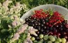 Неужели для садоводства настали нелёгкие времена?