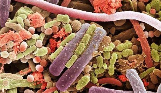 Пересадка человеческих бактерий растениям