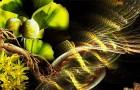 Революционный взгляд на наследуемость растений