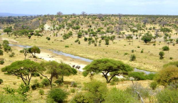 Влияние растительности в саваннах на глобальный климат