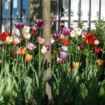 Цветники и клумбы