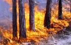 Дым помогает семенам прорастать