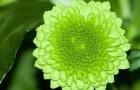 Гомеопатия при бессоннице
