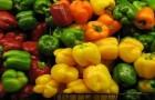 Использование перца овощного (сладкий) в диетах