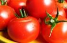 Использование помидоров (томатов) в диетах