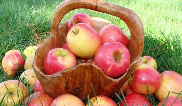Использование яблок в диетах