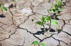 Изменение климата и грядущее снижение урожайности