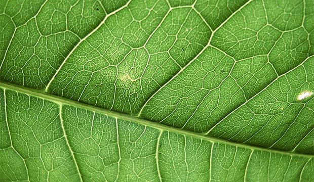 Изучение-растений-из-космоса
