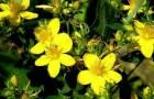Какие лекарственные растения используют в комплексном лечении язвенной болезни?