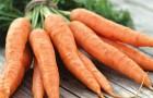 Кулинария для диабетика — морковь