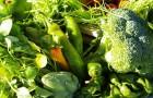 Лучшие многолетние растения для огорода