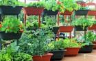 Питательный огородик в контейнерах