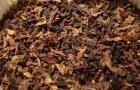 Вредно ли курить сигареты при язвенной болезни?