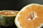 Агли фрукт – опасны ли гибриды для нашего здоровья