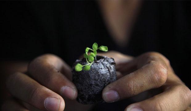 Бактерии, помогающие восстанавливать почву