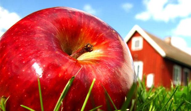 Как вырастить самые дорогие в мире фрукты