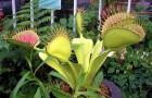 Влияние экзотических растений на экосистему