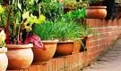 Выращиваем овощи на подоконниках и балконах