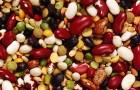 5 причин высадить бобовые на грядку