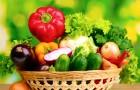 98-летний мужчина вылечился от рака легких благодаря овощам из своего огорода
