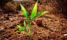 Борьба с загрязнением почв
