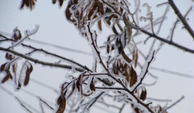 Что делать, если дерево или кустарник замерзли?