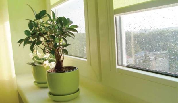 Формирование комнатных растений