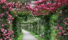 Формирование роз на перголе