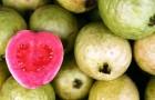 5 самых богатых витамином С фруктов и овощей