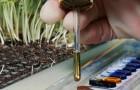 Химический состав почвы и его значение