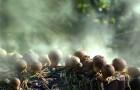 Как грибы меняют климат