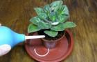 Как поливать растения и что для этого требуется